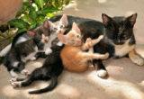 Aimer les chats