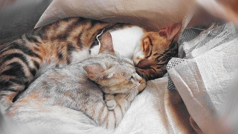 Faire aimer les chats