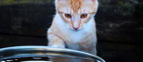 fontaine à eau chat