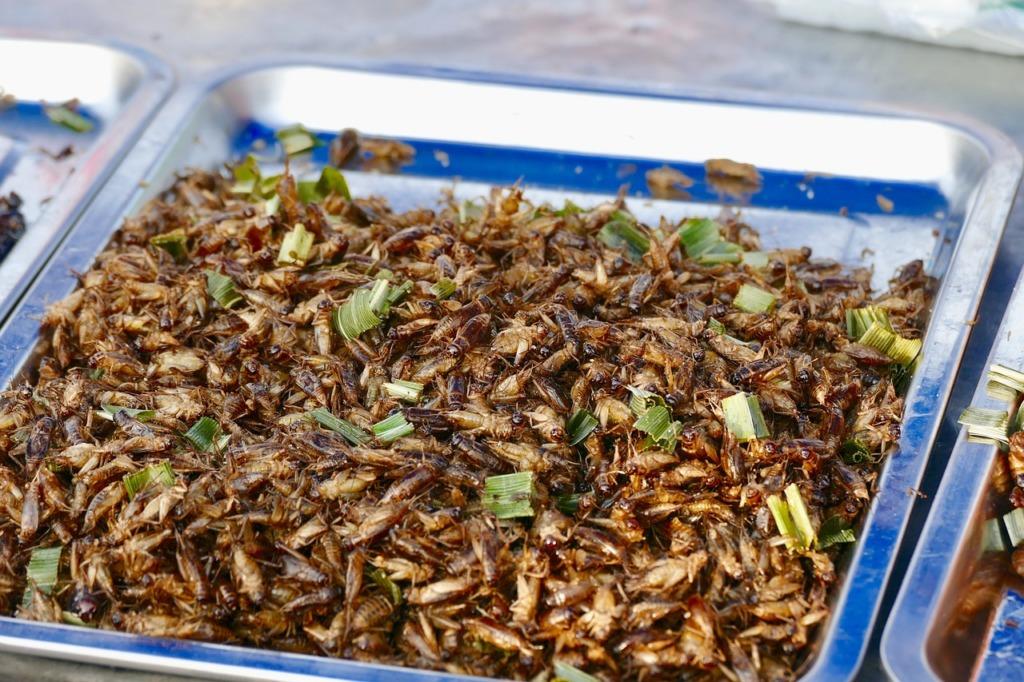 protéines insectes