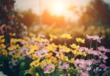 jardin cosy