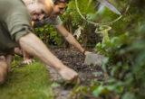 planter du chanvre