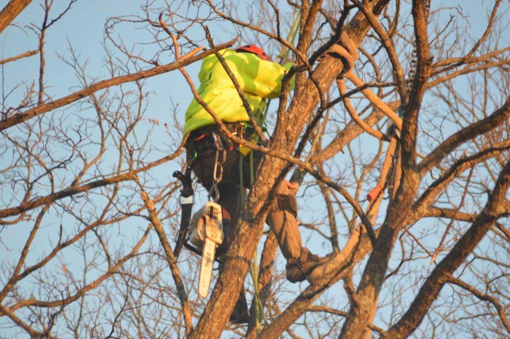 résoudre arbre